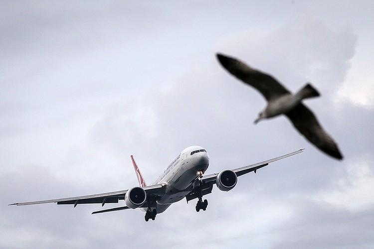 Чайка у аэропорта Ататюрка в Стамбуле.