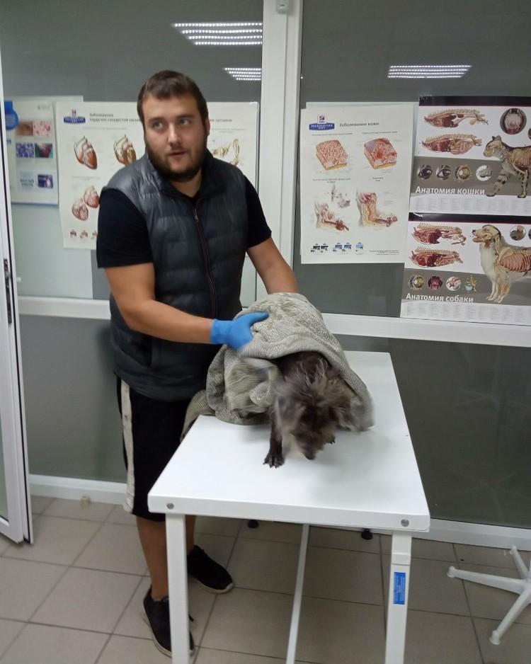Собаку спасли и привезли в ветклинику. Фото: приют для животных «Друг».