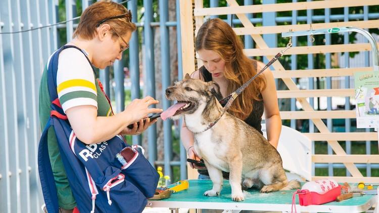 Волонтеры помогают животным найти любящий дом Фото: фонд «Рэй».