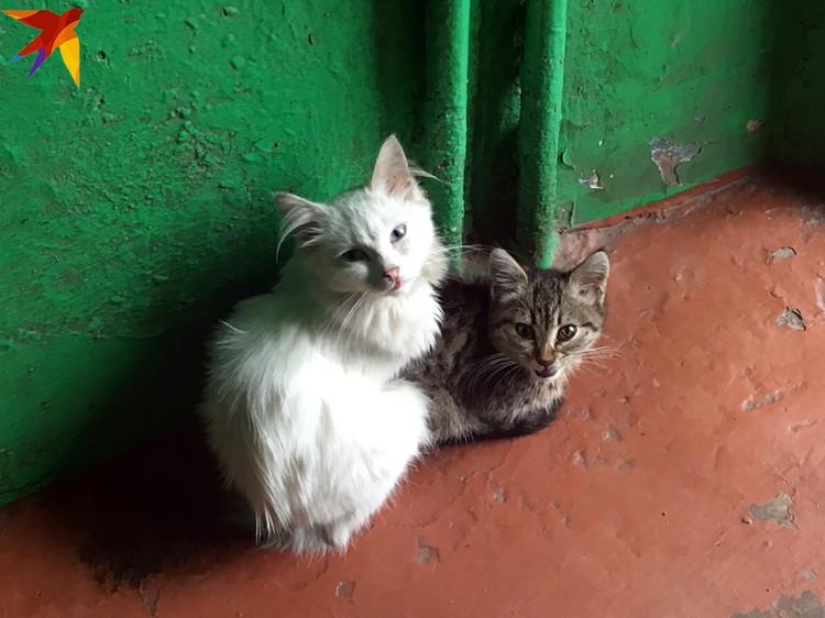 В поселке бездна котов.