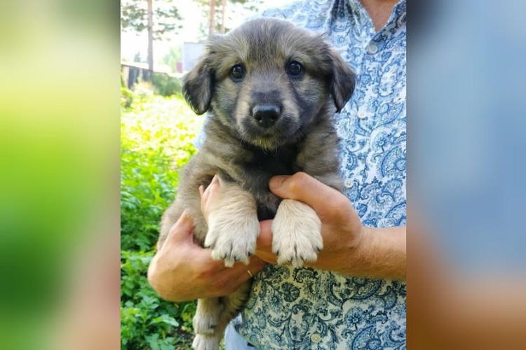 Этому щенку, которого волонтеры подобрали уже после несчастья, тоже ищут новый дом. Фото: предоставлено волонтерами.
