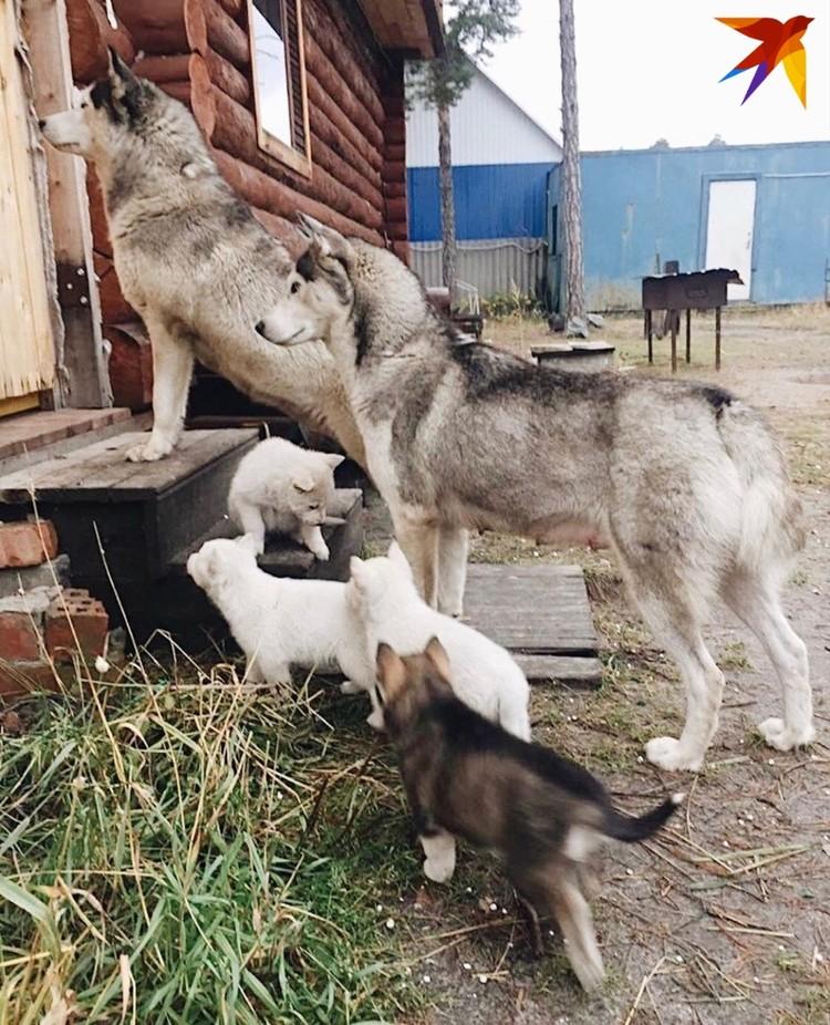 Хозяева уехали с дачи с наступлением заморозков и бросили беременных собак умирать. Фото: предоставлено Еленой Саютиной