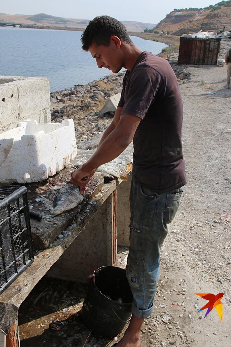 Али, продавец рыбы у моста через Евфрат