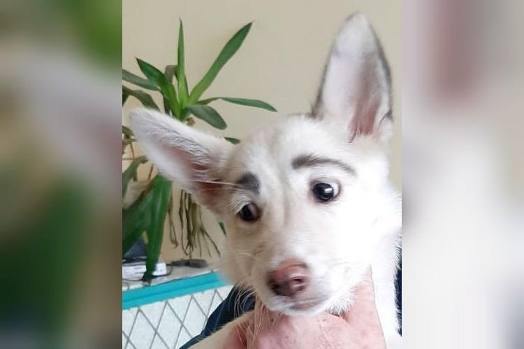Собачку назвали Фрида - в честь известной художницы. Фото:dobrye_ruki_bratsk.