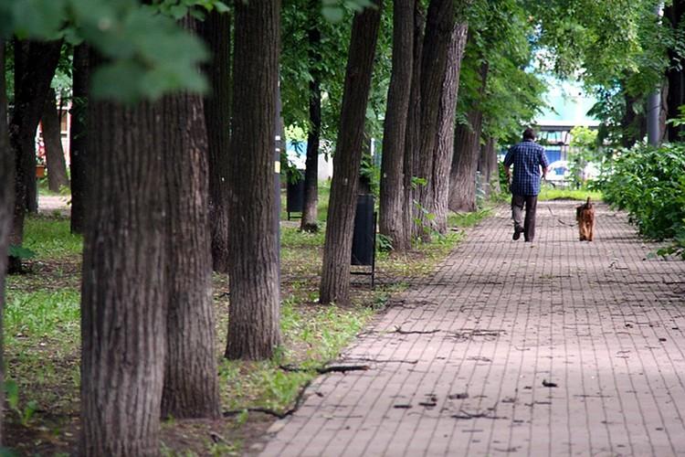 Считается, что в парке имени Кулибина бродит дух бабушки Максима Горького.