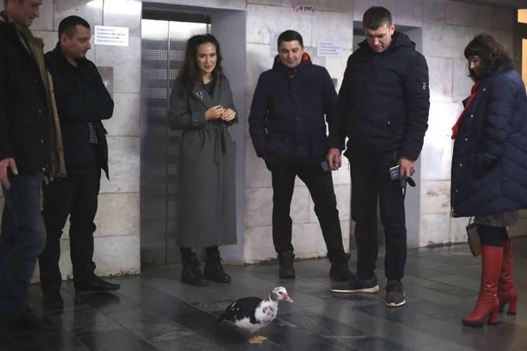 Потерявшуюся уточку принесли в местную телерадиокомпанию, чтобы там помогли ее пристроить. Фото: Виктор ГОРЕЛОВ.