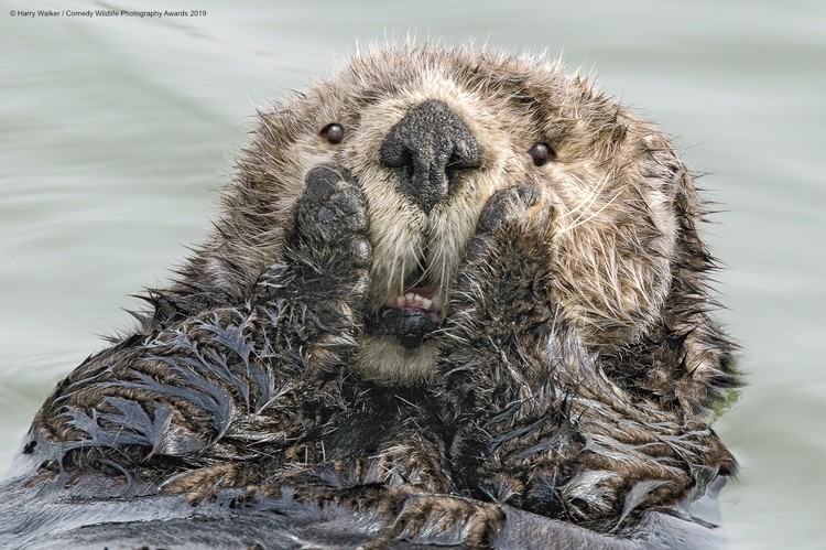 Фото: Harry Walker/The Comedy Wildlife Photography Awards 2019