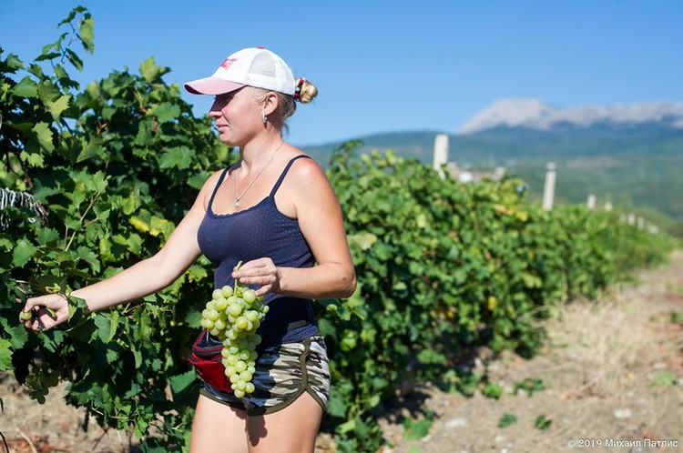 Сбор винограда всегда привлекает туристов