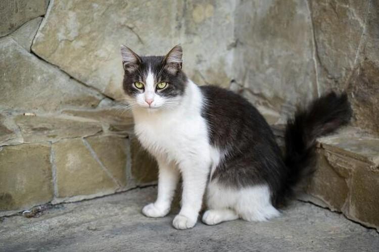 """Баксу около года, он тоже обработан от паразитов, привит и кастрирован. Фото: центр помощи бездомным животным """"Мягкие сердца"""""""
