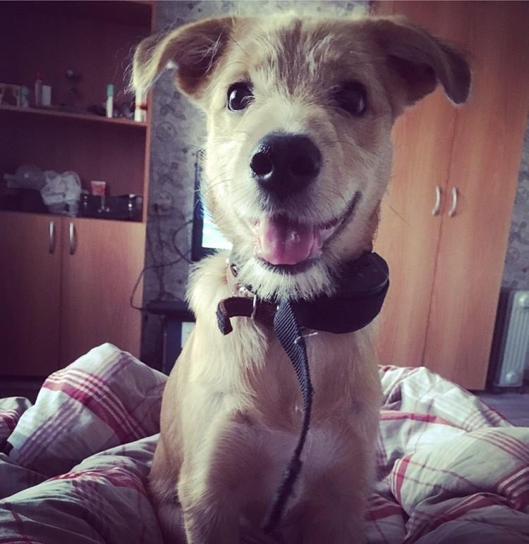 И стал красивым взрослым псом. Фото: https://vk.com/cat_nsk