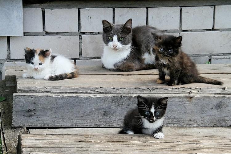 Котов можно назвать санитарами дома, так как они ловят мышей и крыс.