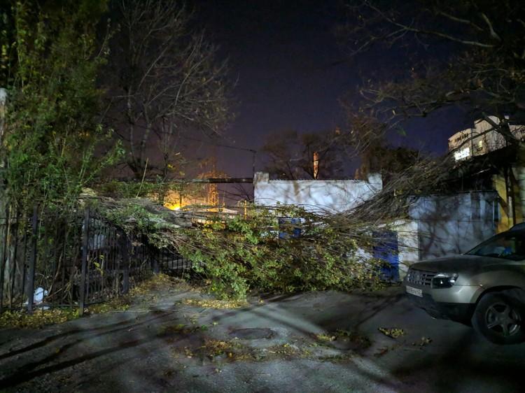 Ветром повалены деревья Фото: Ольга Девяткина