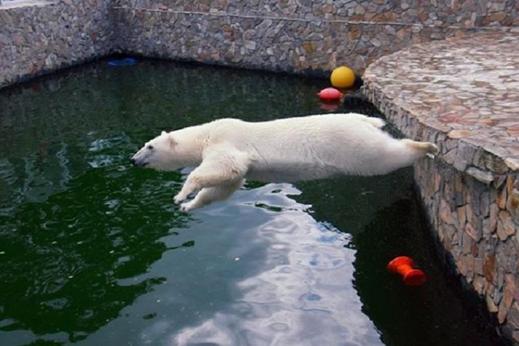 Хаарчаана всегда бодра и весела / Фото: Ленинградский зоопарк