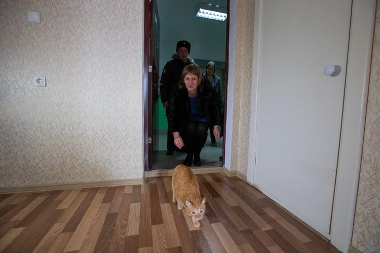 Первым в двухкомнатную квартиру, по традиции, запустили кота