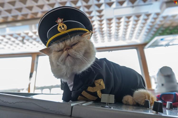 Кот Матрос 13 лет служит на теплоходе между Петербургом и Москвой.