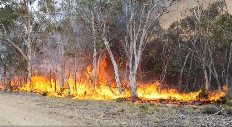 Многие уже выгоревшие территории всё ещё угрожают повторными пожарами - источники огня могут скрываться под обвалившимися деревьями