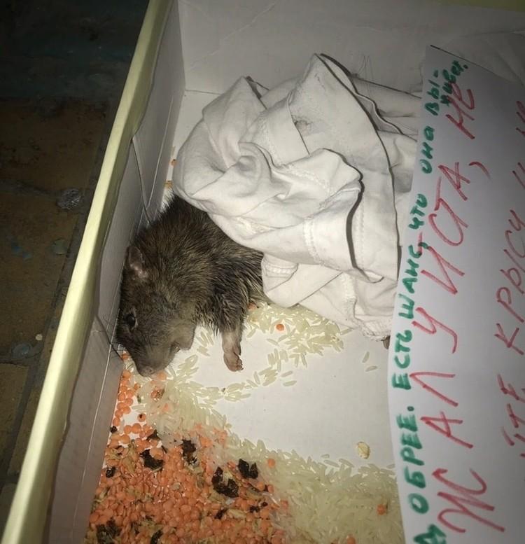 """Многие животные попадают в ЦРК в очень тяжелом состоянии. Фото: """"Крыскино логово"""""""