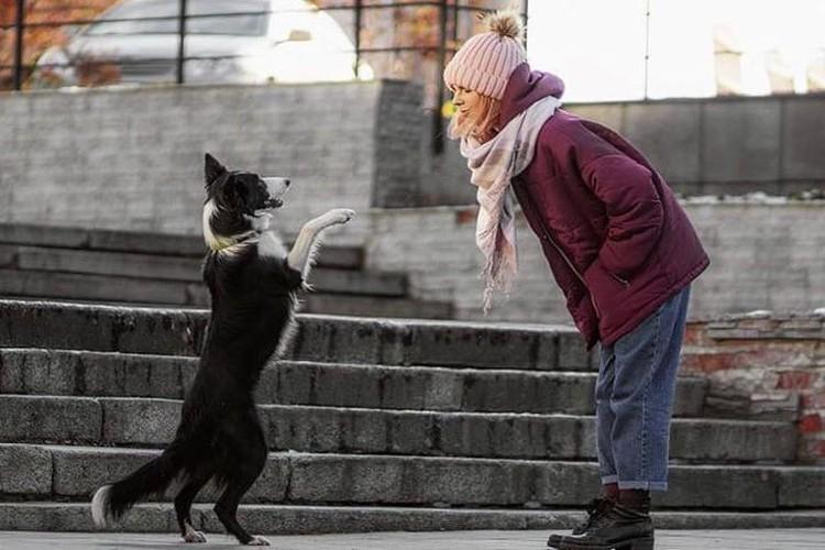 Ультра - дрессированная собака, участвует в престижных соревнованиях.