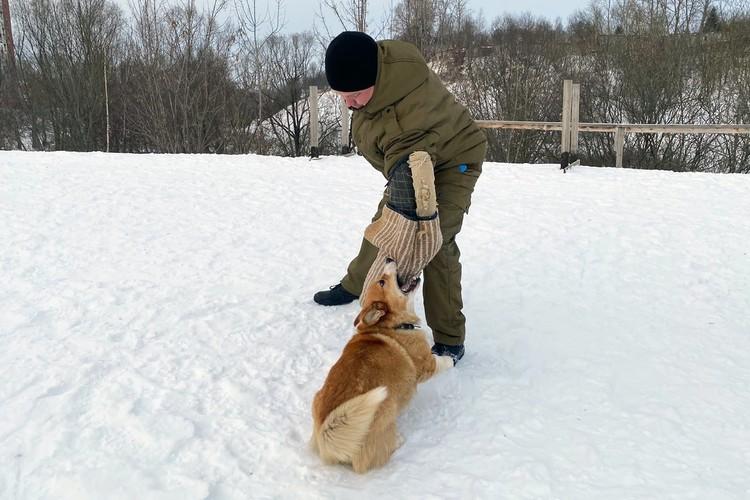 Ничего удивительного, настоящий свирепый пес