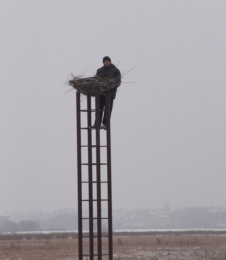 На высоте шести метров над землей расположены гнезда для привлечения пролетающих птиц.