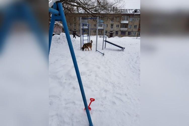 Животных сибиряки замечали и на детской площадке. Фото: предоставлено героем материала