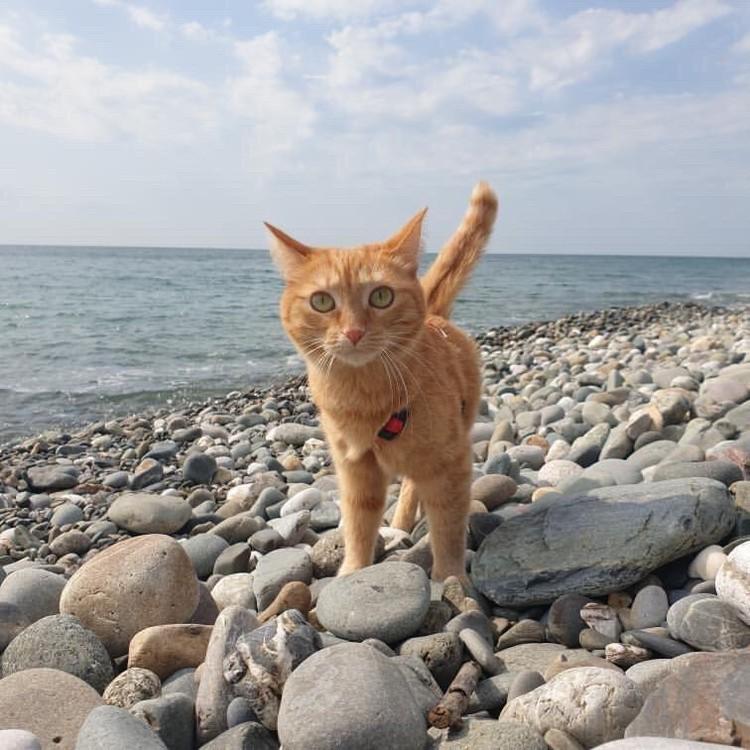Путешественница уже побывала на пляже. Фото: instagram.com/valery_cat