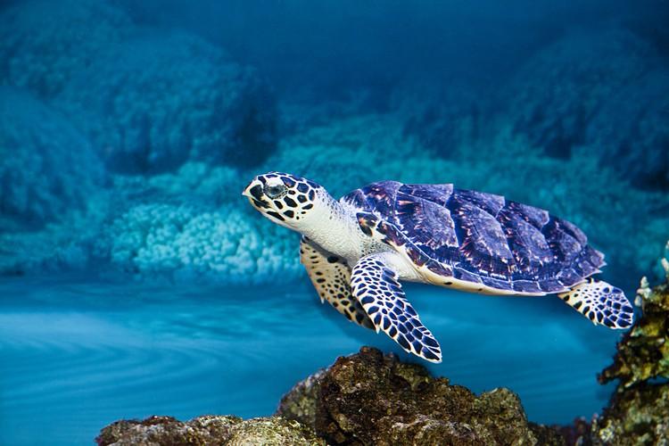 фото Воронежского океанариума.