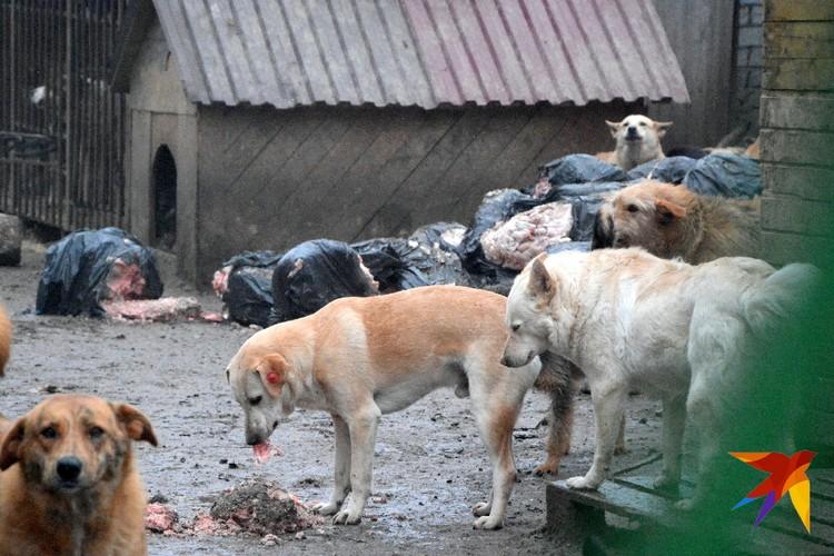 Еда для животных валяется прямо на территории.