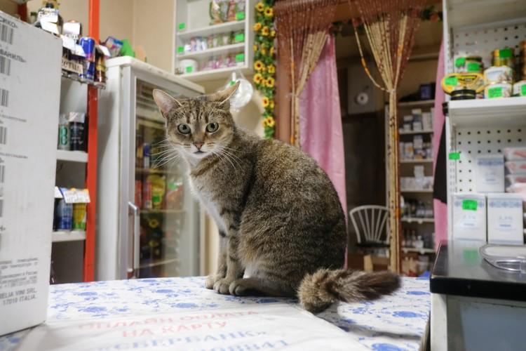 Специалисты уверяют: кошкам и собака человеческий коронавирус не нужен. У них есть свои.