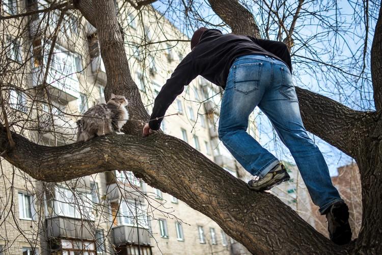 Чтобы спасти кота, надо мыслить, как кот.