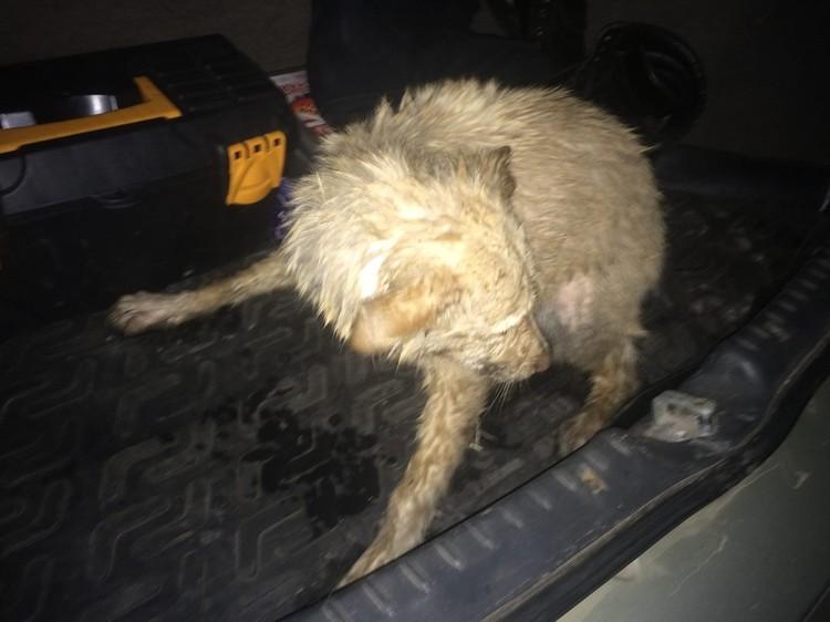 Пса отогрели в машине