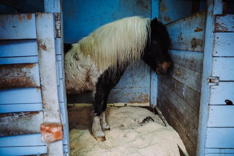 А пони, тоже кони