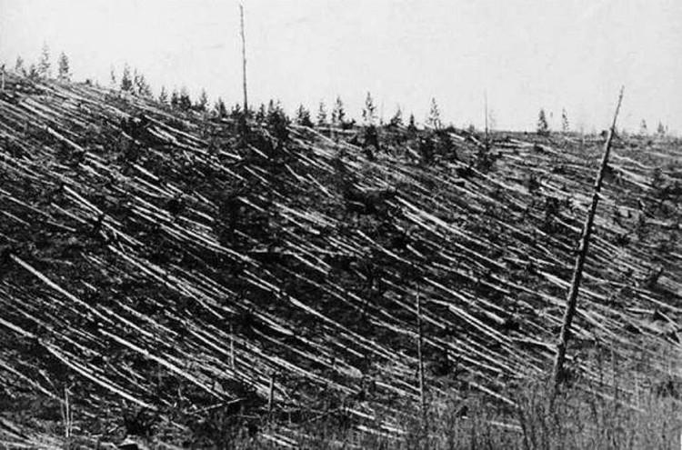 Лес был повален на огромной территории.
