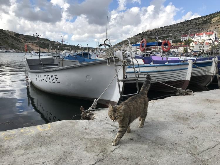 2 Коты в Балаклавской бухте, несмотря на коронавирус, чувствуют себя прекрасно. Рыбаки все равно их кормят – жалко пушистых разбойников.