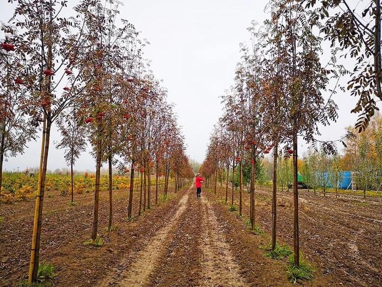 Уже 15 лет здесь работают только местные деревенские жители. Фото предоставлено «Питомником Савватеевых»