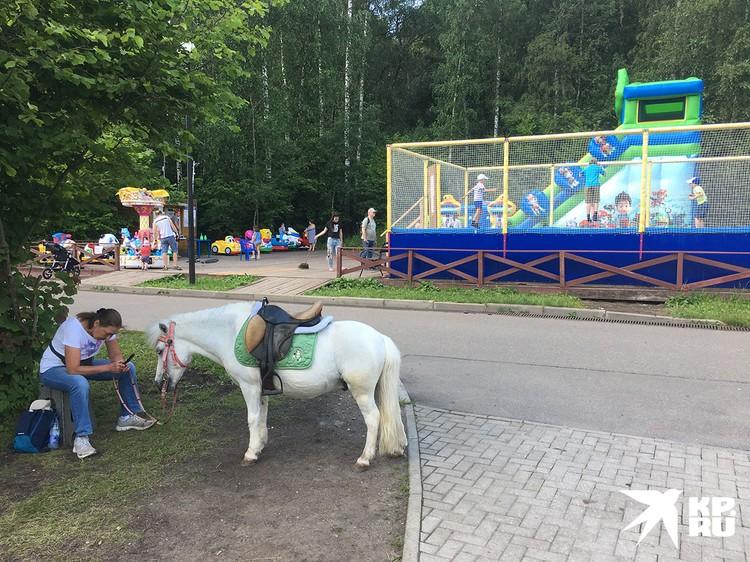 Покататься на пони в течение десяти минут стоит 300 рублей. Услуга сугубо для детей.