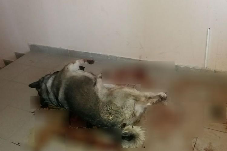 Шокирующее фото с места гибели собаки. Фото: Анна Жданова.