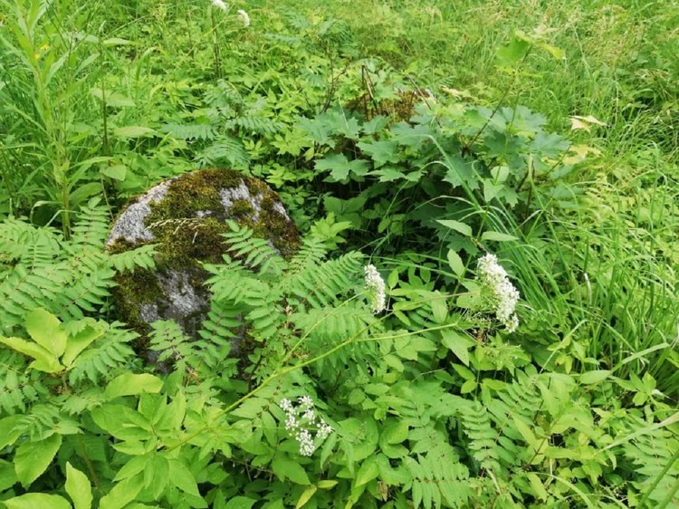 Некоторые надгробья от старости покрылись мхом и утонули в зарослях травы