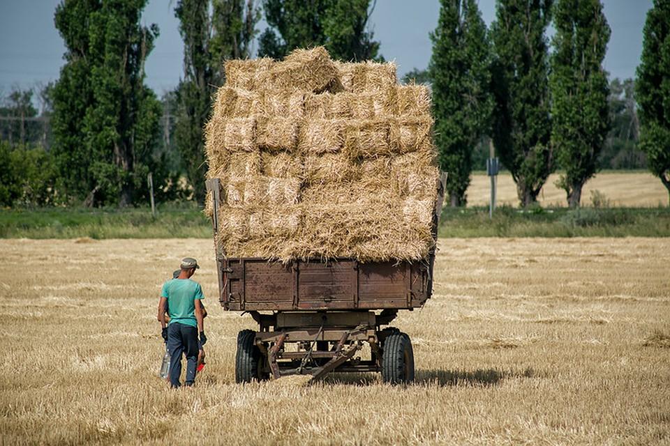Республика будет с хлебом. Фото: Натальи Чумаковой