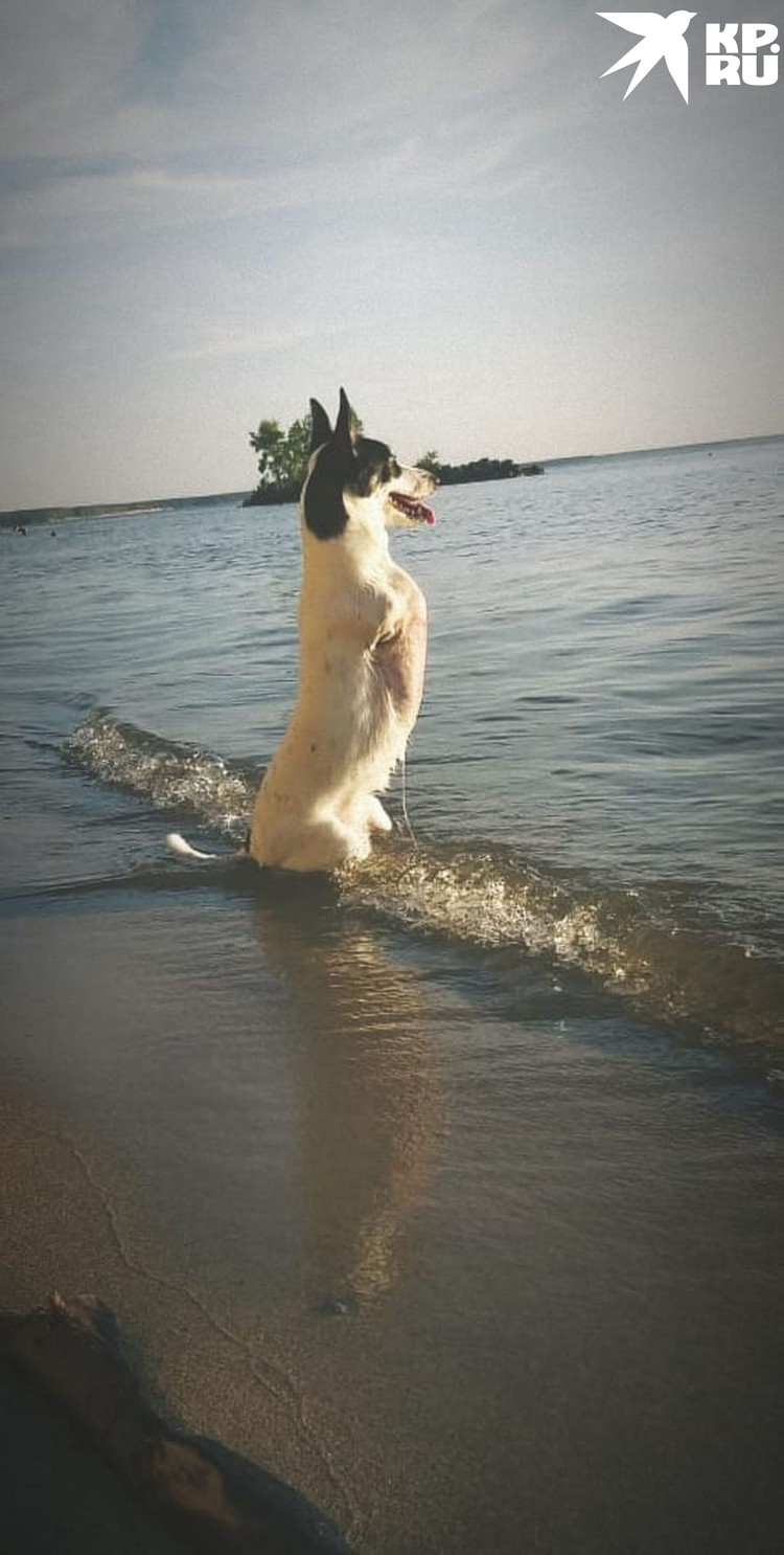 - Пошли купаться, вода теплая! Фото: Ирина АНИКИНА