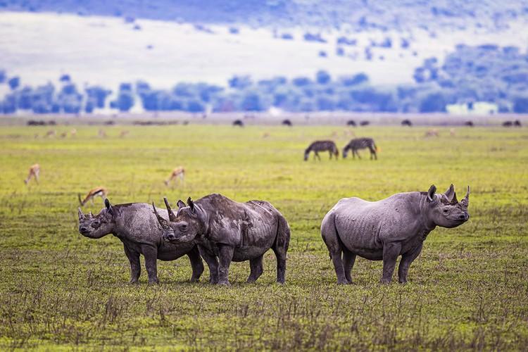 На сафари в национальные парки Танзании можно слетать с Занзибара, такие экскурсии есть, в основном двух- и трехдневные. Полноценные сафари-туры – это уже неделя.