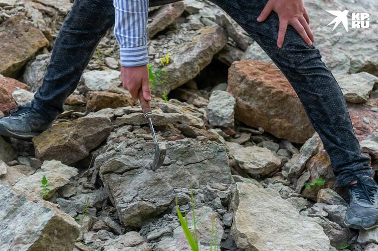 По словам искателей, кого-нибудь из древних можно обнаружить почти в каждой плите известняка