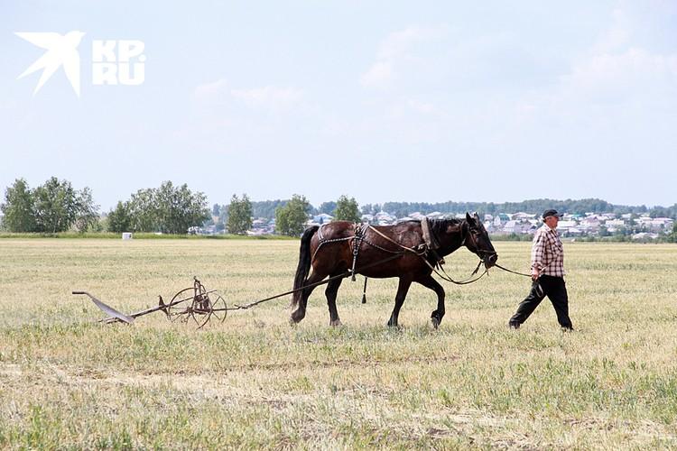 Покупка земли в России — это бюрократический ад