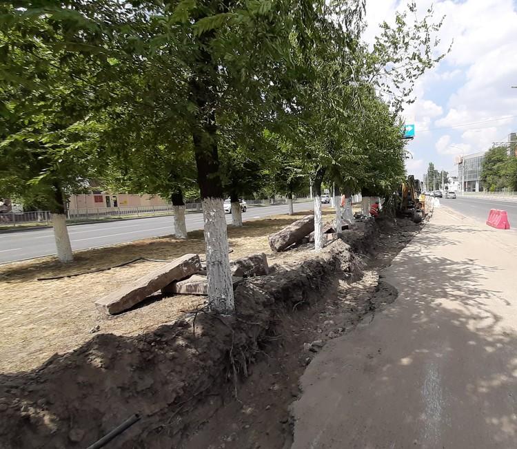 Эти деревья за свою жизнь не раз переживали санитарную обрезку. Надеемся, сегодняшние действия дорожников они тоже переживут. Фото: Екатерина СИМОХИНА