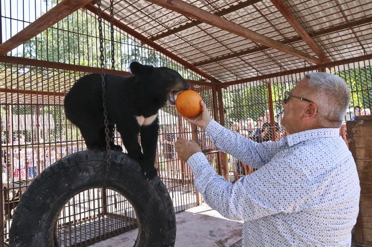 Директор зоопарка Сергей Писарев угощает медведя дыней.