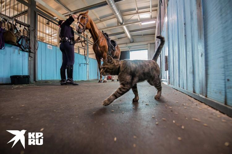В конюшне живет кот, которого называют «боевым кавалеристом-мышеловом».