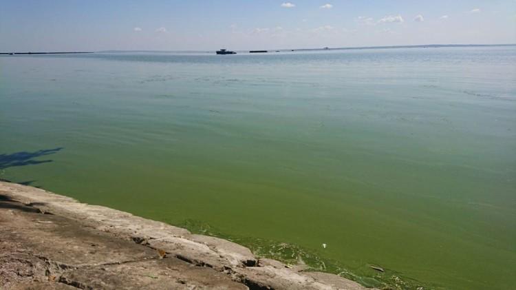 А вот такой цвет имеет Калининградский залив.