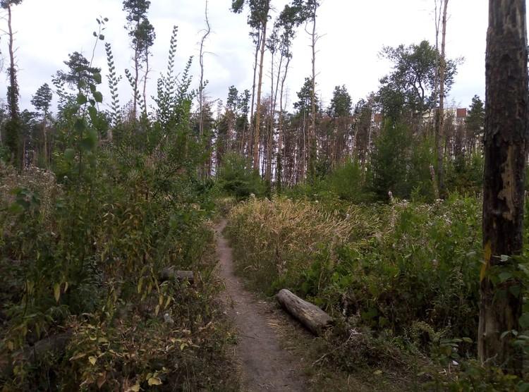 От многих участков Северного леса остались рожки да ножки.