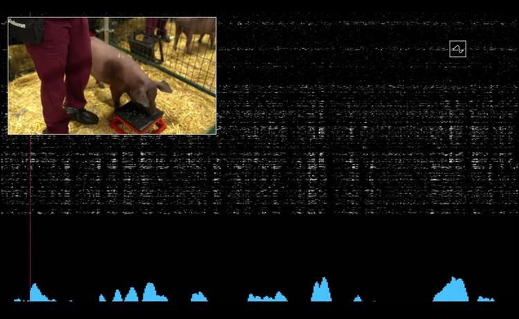 На большом мониторе зрителям демонстрировали параметры активности мозга Гертруды.