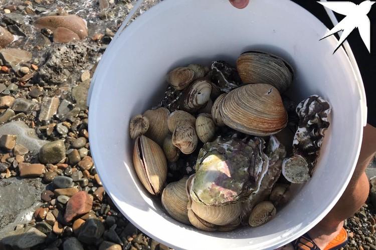 Горожане устремились за морепродуктами
